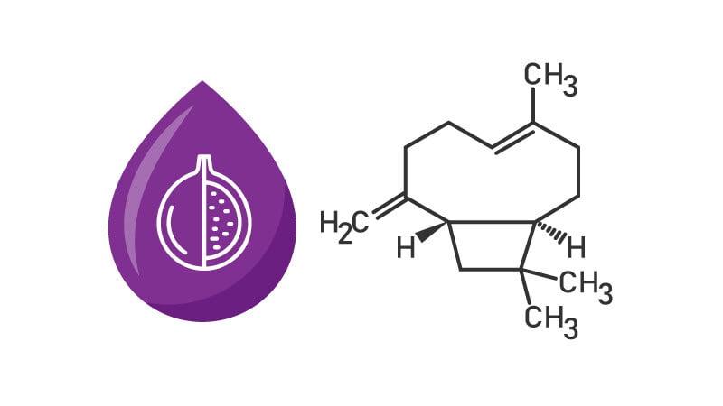 Illustration of Beta-Caryophyllene Chemical struc