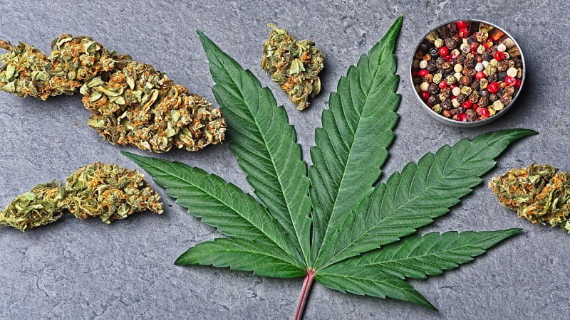 Cannabis buds and leaf with red color pepper in small bowl